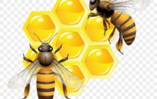 honey and bees clipart photo